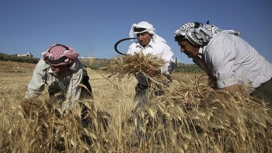 Photo of صیہونی دہشتگردوں کا فلسطینی کسانوں پر حملہ، متعدد زخمی